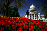 Blooming Capitol