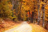 The Yellow-Leafed Road
